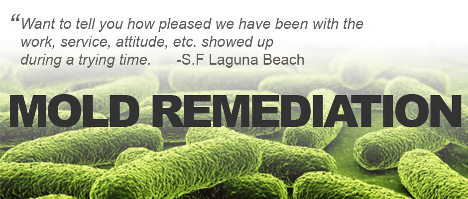 mold remediation services laguna beach
