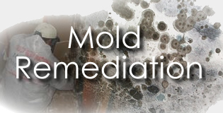 Mold Abatement Service Cypress