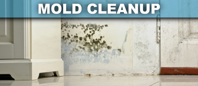 Mold Cleanup Garden Grove