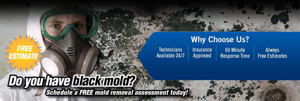 Lake Forest mold remediation