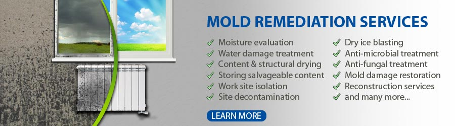 Mold Abatement Services Villa Park
