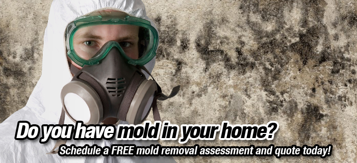 Modjeska Canyon Mold Remediation