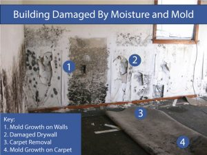 Fountain Valley Mold Specialist